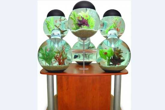 Care este locul acvariului?