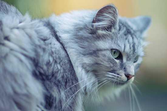 Locuri de joaca pentru pisici