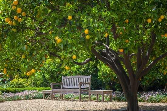 Cate ceva despre copacii fructiferi