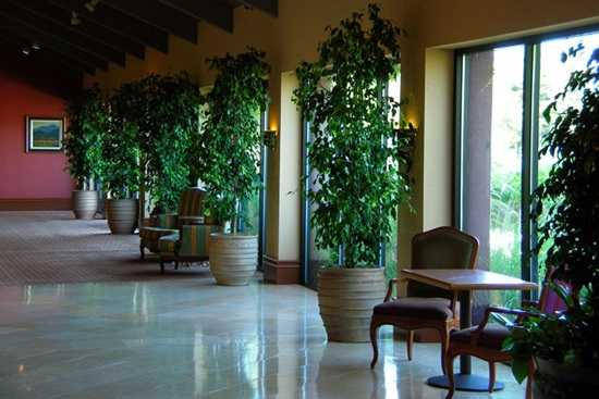 Caminul botanic – Plante pentru apartament