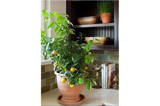 Gradina botanica de acasa