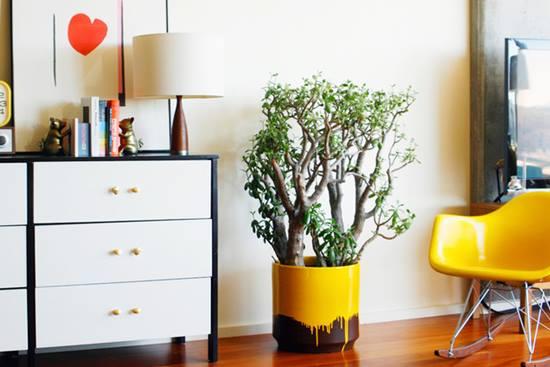 Intretinerea plantelor naturale