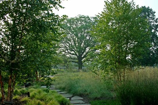Amenajarea gradinii, dincolo de estetic