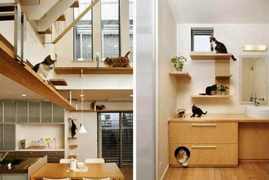 Recomandari pentru proprietarii de pisici