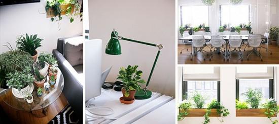 Plantele potrivite pentru biroul tau