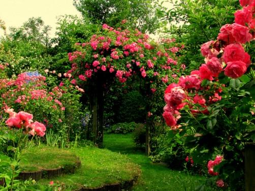 Amenajati gradina cu trandafiri parfumati