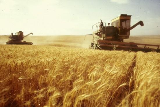 Romania in top 10 puteri agricole din Uniunea Europeana