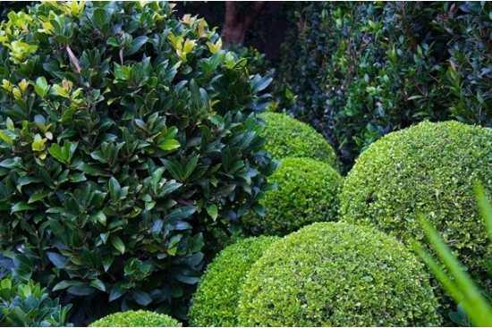 Gradini monocromatice: Verde, verde si iar verde!