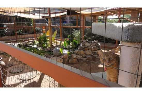 Locul de joaca pentru pisici